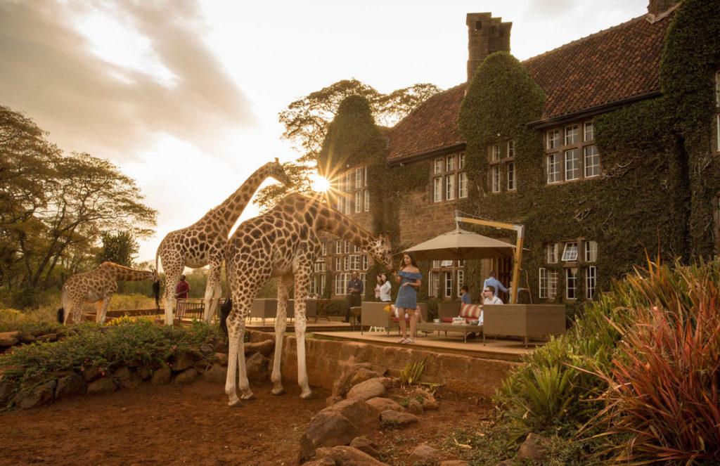 cafe Giraffe Manor