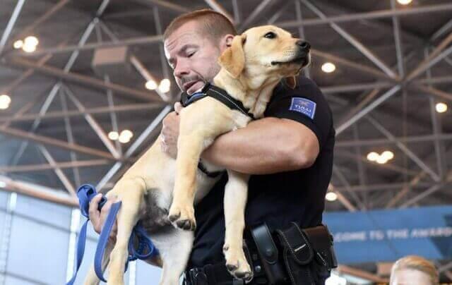 Собаки эффективнее тестов на COVID-19.