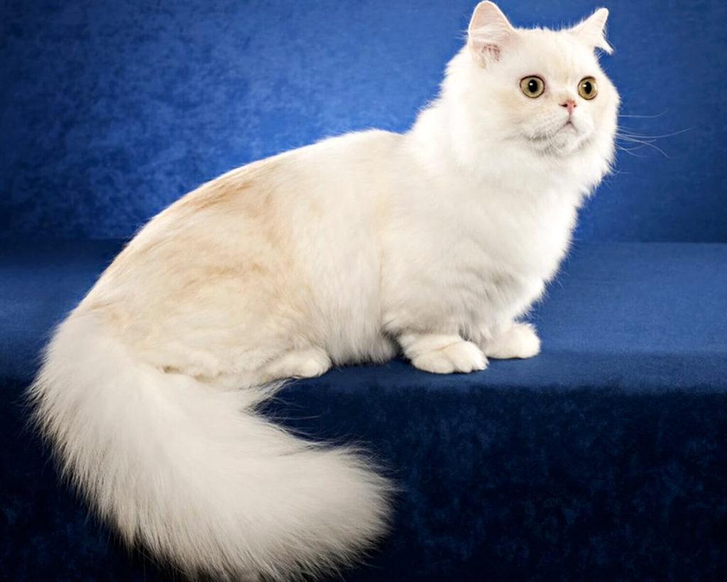Породы кошек с уникальной формой тела.4